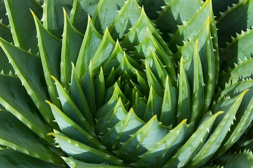 Aloe Vera Fixing And Treatments